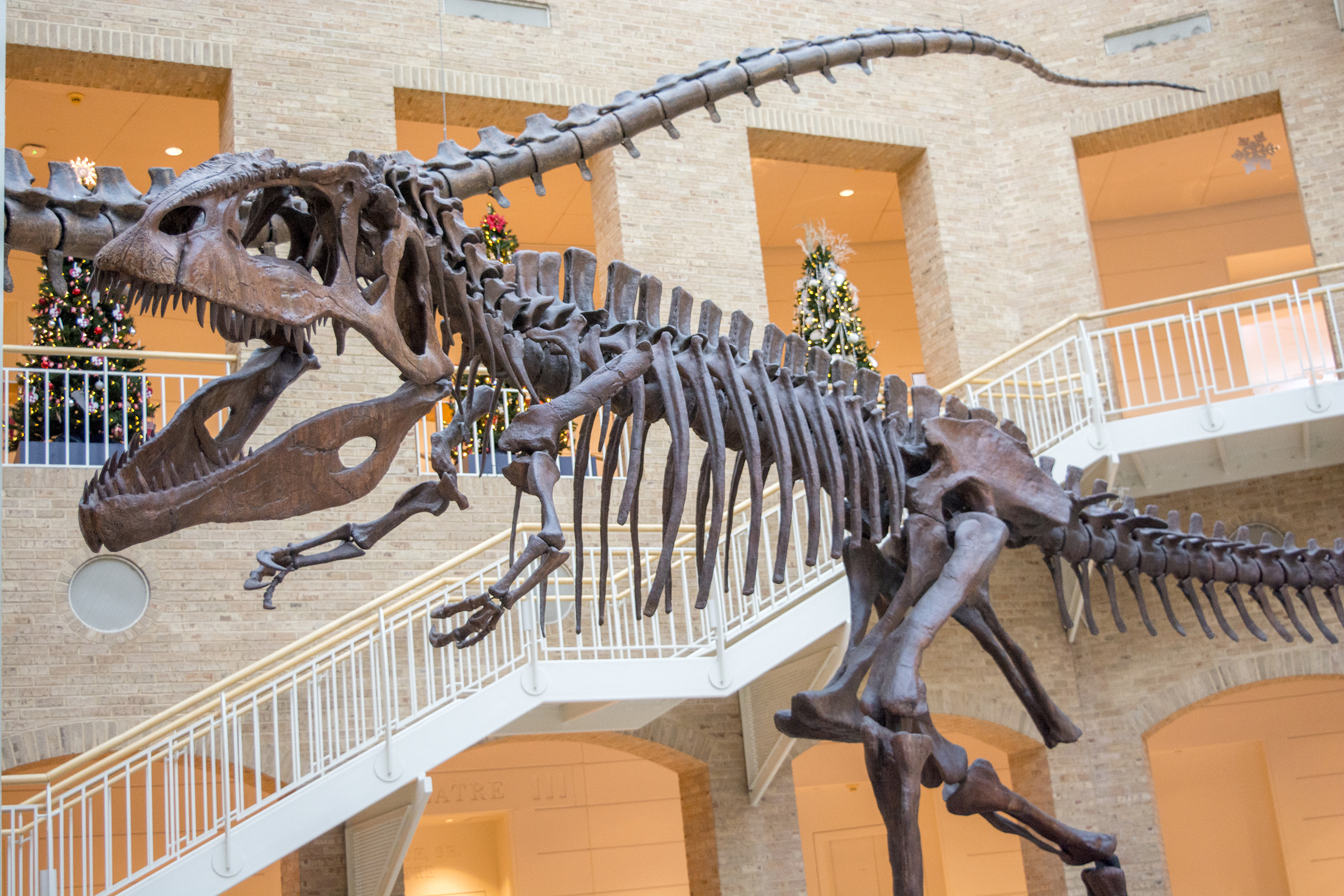 Dinosaur skeleton in front of festive Christmas trees at Winter Wonderland at Fernbank Museum of Natural History